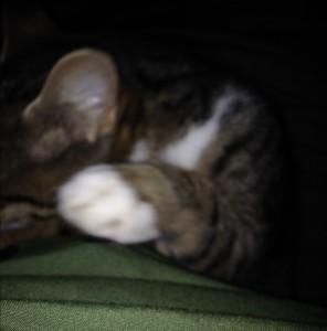 Et lille snapshot med min Iphone af den noget nærgående kat.
